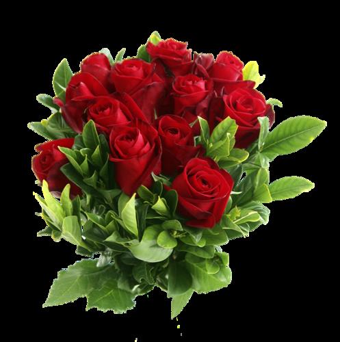 kwiaty roze
